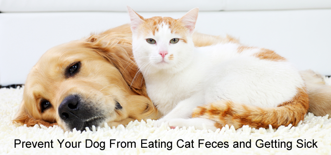 Stop Dogs from Eating Cat Feces (Poop)